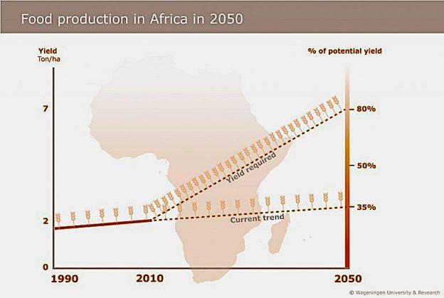 cereals_africa_trends_en-2-768x517